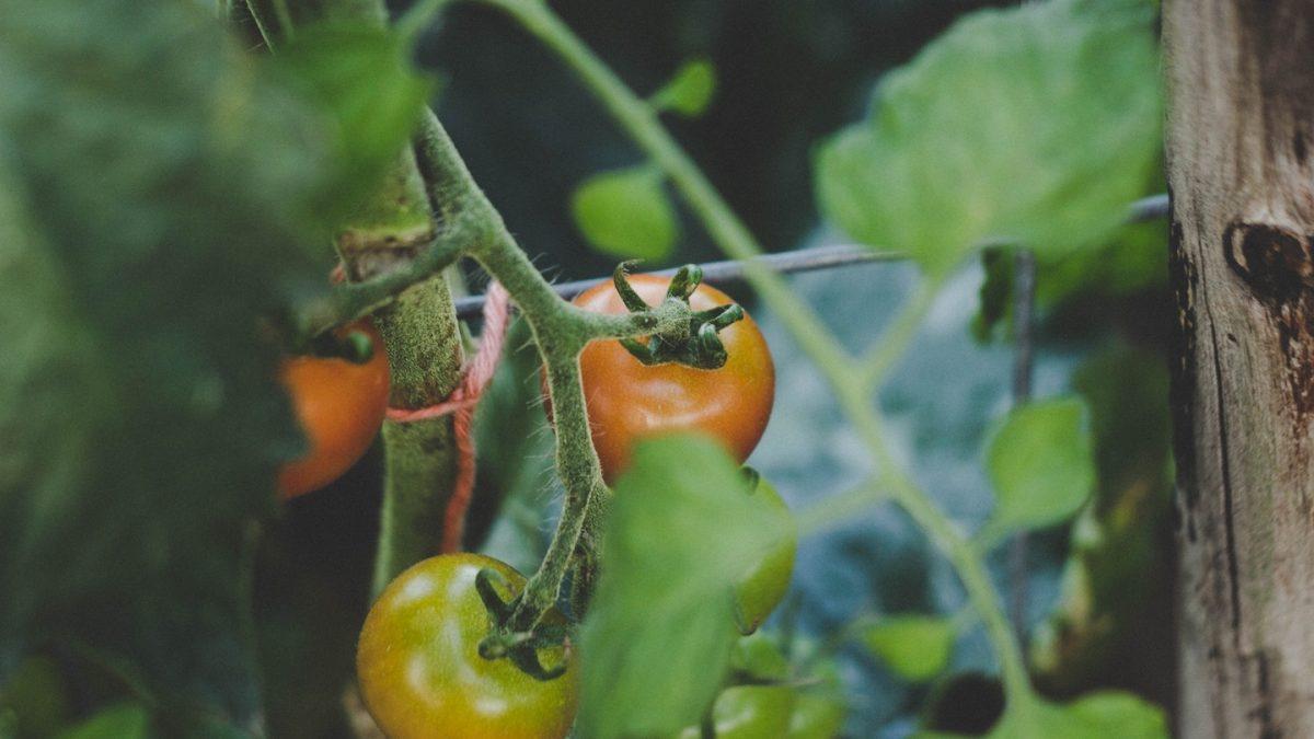 How to Keep Caterpillars off Plants: an Effective Cutworm Treatment