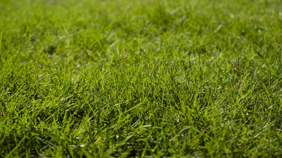 Avoid Weed Wacker Injury: String Trimmer Safety and Maintenance Tips